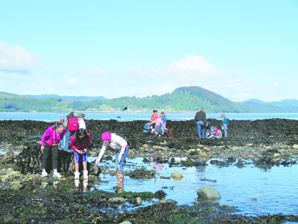 Tide Pool Time Waning Waves Unveil Treasures Below The Surface Of