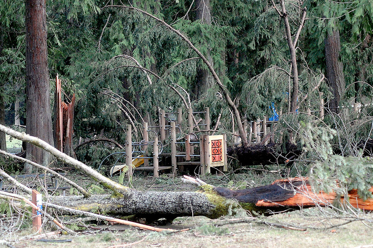 Debris continues to litter Port Angeles' Lincoln Park after windstorm