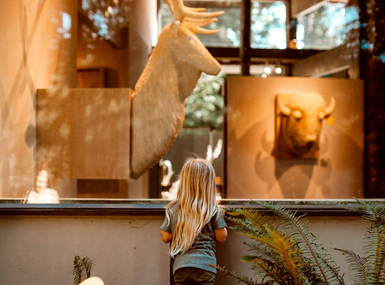 """A young girl looks through a window at the Port Angeles Fine Arts Center at the exhibit """"Conservation From Here"""" by artist Joseph Rossano. A presentation Thursday will key off the show, done in partnership with Olympic National Park. (Jordyn Owen)"""